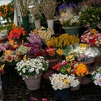 Plants and Flower markets