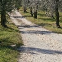 L'alberaccio - Fiesole Hiking Trail