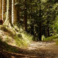 Pian Dei Cerri - Signa Hiking Trail