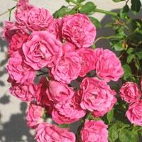 Giardino Delle Rose Florence, Italy